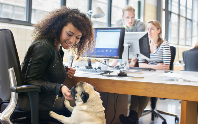 Young professional working at office and feeding dog