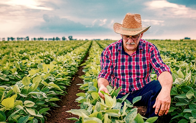 Image of farmer squatting in his field to inspect his plants. Protecting Your Farm or Ranch From Business Liabilities