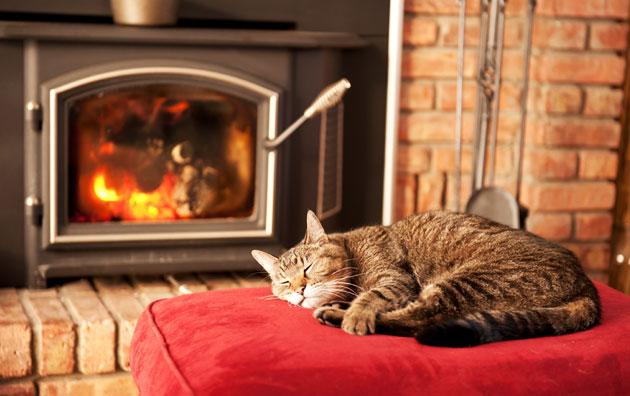 Cat curled up on pillow in front of wood stove