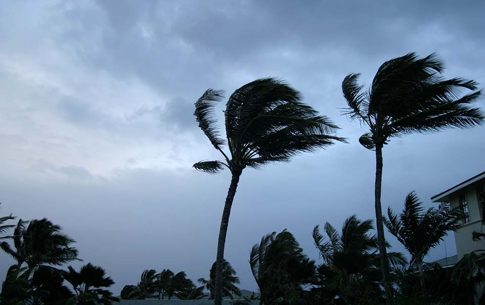Palm trees blowing in a hurricane
