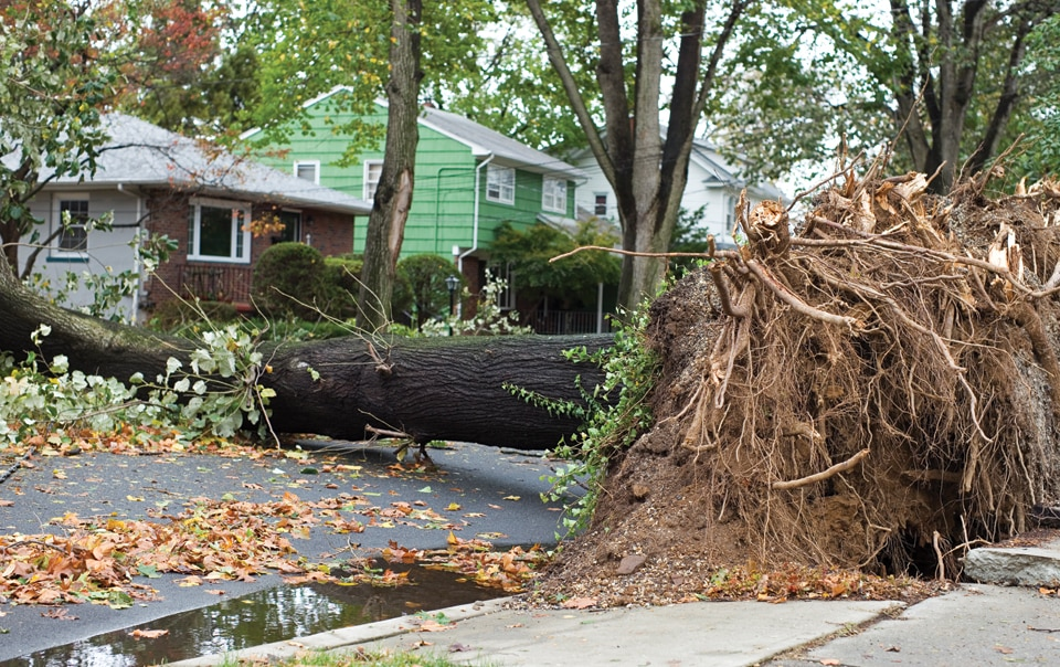 Tree fallen in front of a house after a hurricane