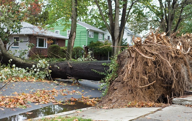 Fallen tree in front of house