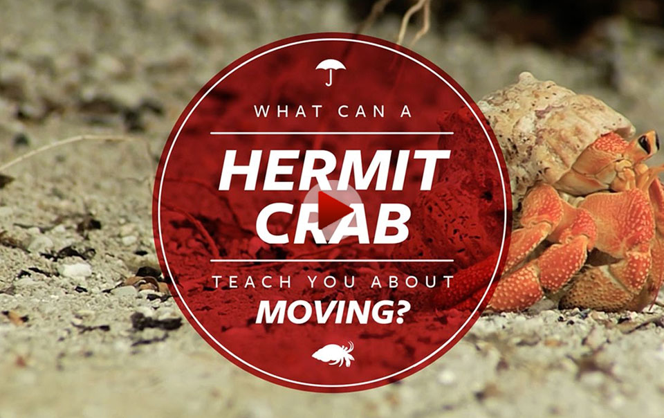Hermit Crab - Home Habitat video series