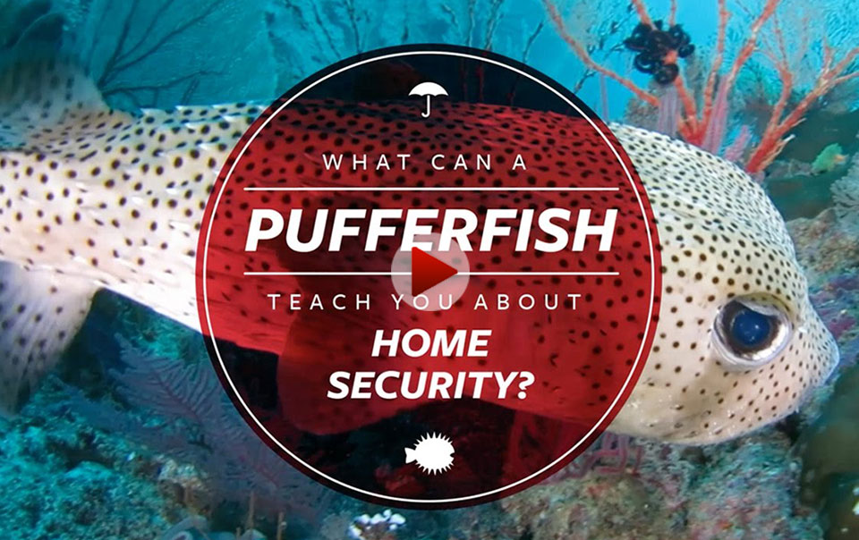 Pufferfish - Home Habitat video series
