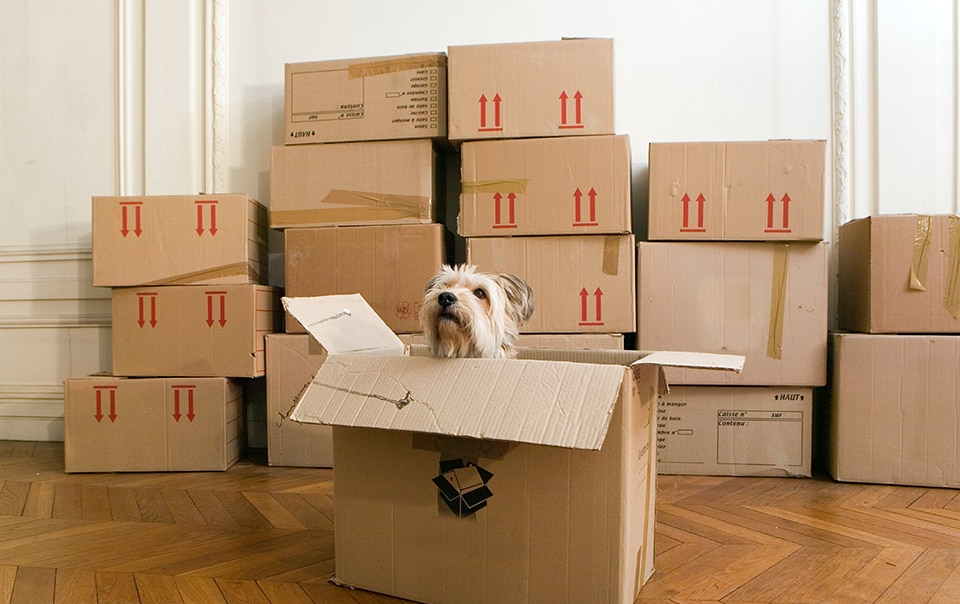 Pet dog sitting in a moving box