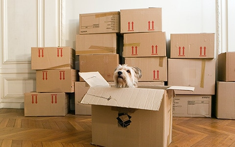pet dog sitting in boxes preparing for move